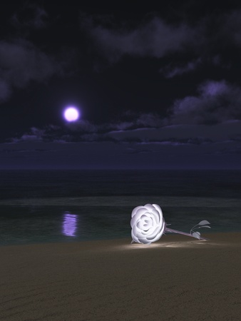 softly: Romance concept featuring white rose glowing softly on moonlit beach Stock Photo