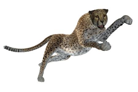chita: Ilustración guepardo prestados aislados en blanco Foto de archivo