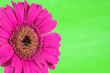 Bright and colorful flower against a plain striking background. photo