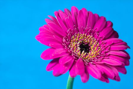 Bright and colorful flower against a plain striking background. Stock Photo - 712343