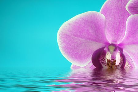 Beautiful and colorful orchids for background use with water reflection. Concept: Beauty,  photo