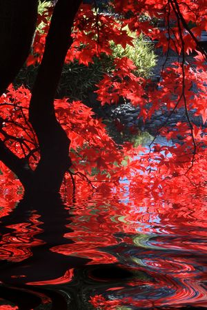 japanese fall foliage: Japanese garden with bright red maple and dark branches. Stock Photo