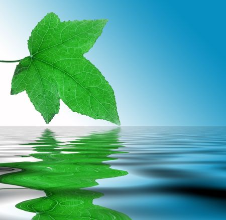 Green leaf with detailed veins being reflected on rippled water.
