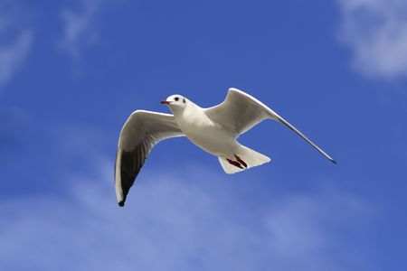 White bird soaring in the blue sky with patches of cloud. photo