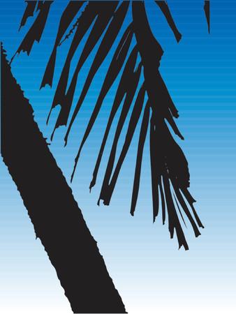 Vector Palm Tree Vector