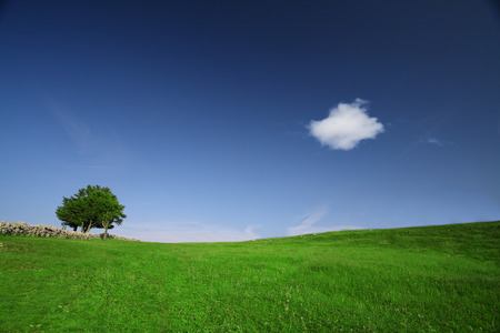 Green field with lone tree and white fluffy cloud on a clear blue day.