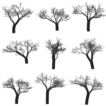 Vector - Silhouette of trees with branches. Isolated and in black. Illustration