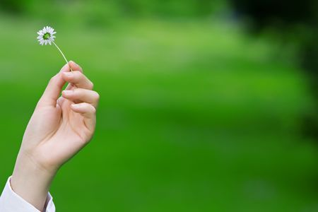 Female hands holding a fragile daisy against a green grass background, environmental theme photo