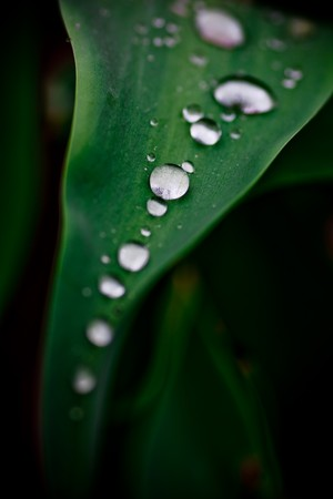 Closeup macro shot of rain water droplets forming on a leaf or grass photo
