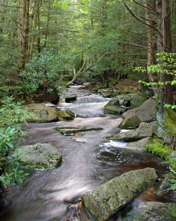blackwater: Blackwater River near Canaan Valley, West Virginia Stock Photo