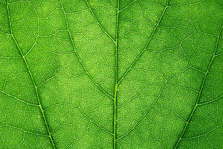 Close-Up of Leaf Texture Imagens
