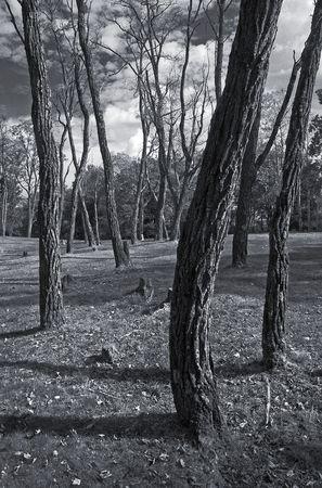 Monochrome image of autumn trees