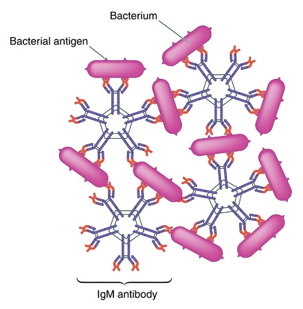 response: Antibody antigen complex