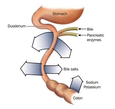 enzymes: Reabsorption of salt and bile from the intestine