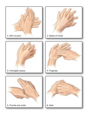 lavarse las manos: Dibujo para mostrar los m�todos correctos de lavado de las manos para eliminar todo rastro de bacterias Foto de archivo