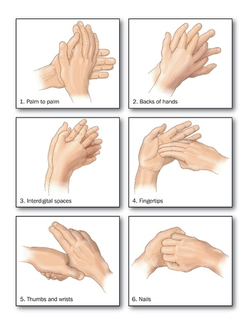 fingertip: Drawing to show the correct methods of hand washing to remove all trace of bacteria