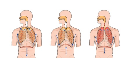 inhalation: Drawing to show normal breathing  inhalation and exhalation , and the effects of lung trauma