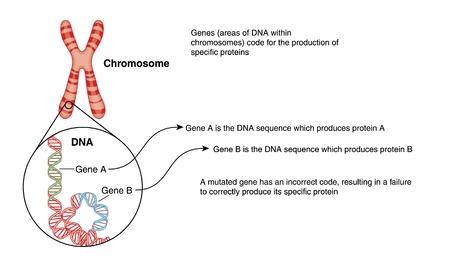 genes: Dibujo de un cromosoma, con el detalle de la estructura del ADN con los genes codificados por colores