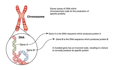 gene: Tekening van een chromosoom, met detail van DNA-structuur met genen kleurcode