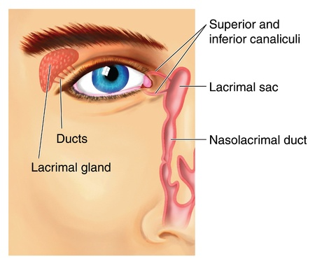 lacrimal: Drawing to show the lacrimal apparatus, with the lacrimal gland producing fluid that crosses the front of the eye and exits through the canaliculi and into the nasolacrimal duct