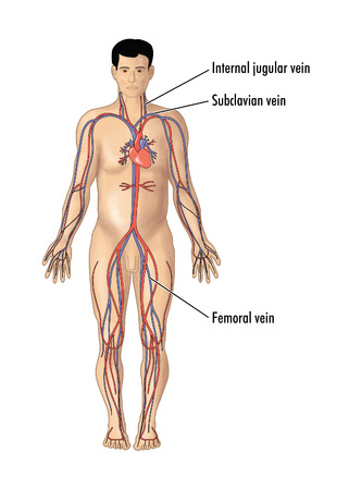 catheter: Drawing of the major arteries and veins, focusing on the vein sites for central line catheter insertion