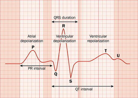 ekg: Heart ECG (EKG) showing the major intervals.   Illustration