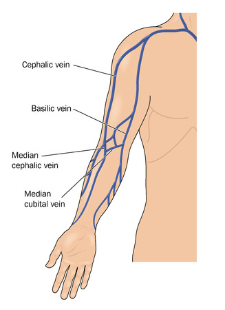 The major veins of the arm. Created in Adobe Illustrator.  Contains gradient meshes.  EPS 10. Stock Illustratie