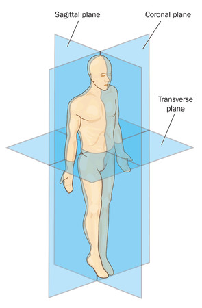 transverse: Anatomical planes of section, showing sagittal, coronal and transverse planes through a male body.
