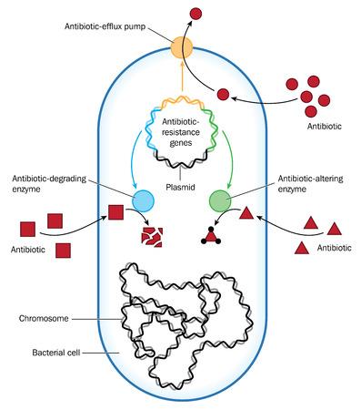 박테리아는 유출 또는 효소를 통한 항생제 내성의 방법을 보여줍니다. Adobe Illustrator에서 작성되었습니다. EPS 10.
