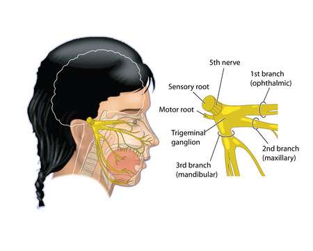 Area covered by the trigeminal nerve of the face Stock Photo