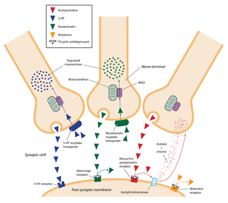 The action of tricyclic antidepressants in the synaptic cleft between neurons