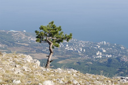 AIPetri mountain and  top views of  coast outlines   Alupka Koreiz Miskhor.  Crimea. photo