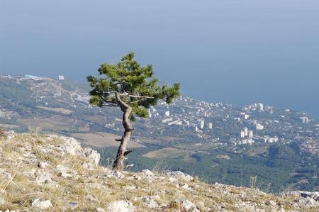 alupka: AIPetri mountain and  top views of  coast outlines   Alupka Koreiz Miskhor.  Crimea.
