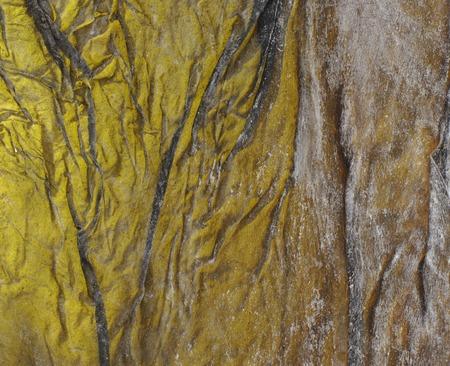 lurid: Blur background, surface of salty leaf dry kelp, seaweed Dashi Kombu