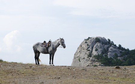piebald: Gray horse in harness against blue sky and mountain