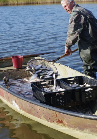 mining ship: Fisher unload catch of fish coregonus from boat in container on lake
