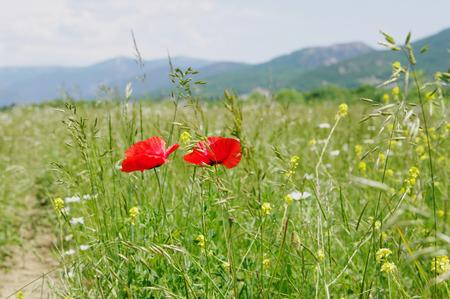 Spring in Baydarsky valley, Crimea