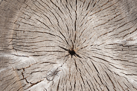 natural background, wooden texture, slice of old tree closeup