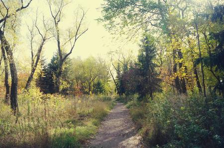 autumn park, toned