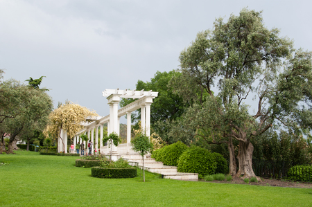 garden with pergola in climbing roses and old olive tree,  Aivazovsky park, Crimea Stock Photo