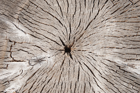 old wooden texture, slice of old tree closeup