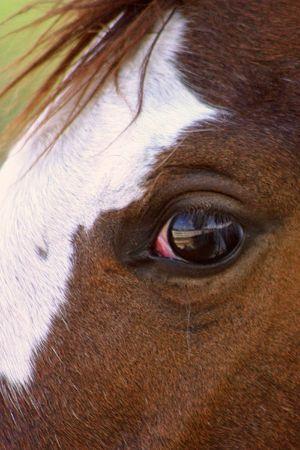 Horse Eye Banco de Imagens