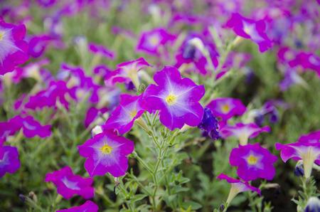 graceland: Violet flower. Stock Photo
