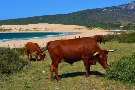 tarifa: A beach near Tarifa, Spain