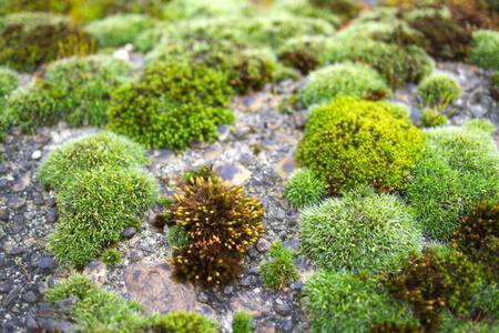 Moss Stok Fotoğraf