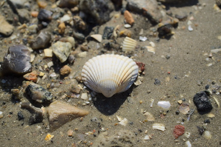 mussel in the mud Stok Fotoğraf