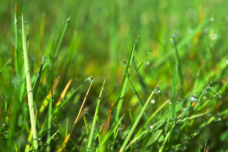 dewdrops: dewdrops at blades of grass