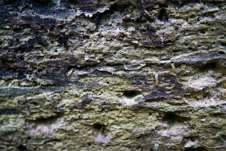 old rotten tree stem