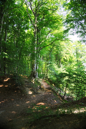 hiking path: hiking path in national park Jasmund