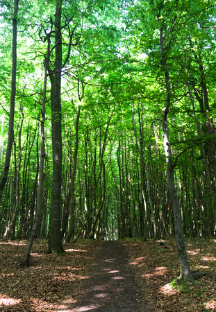 hiking path in national park Jasmund